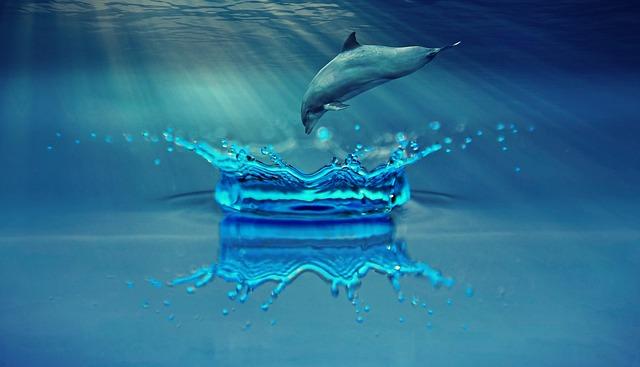 skok delfína