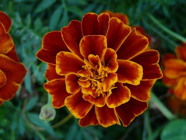 květ.jpg