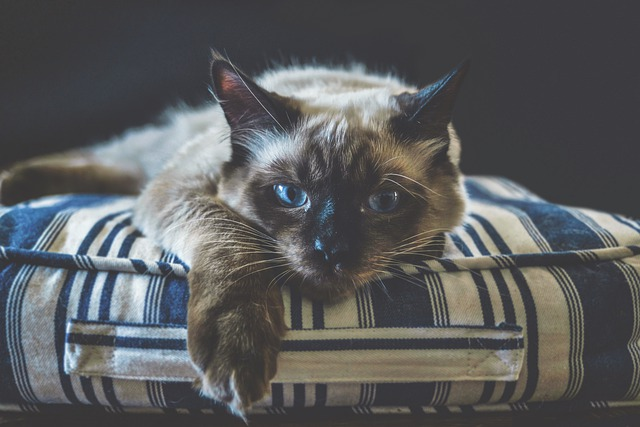 mačka na vankúšiku.jpg