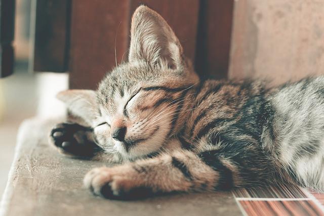 spiace mačiatko.jpg